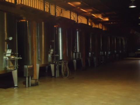 Vinícola Cousiño Macul - Produção