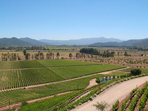 Viña Indómita - Valle de Casablanca - Chile