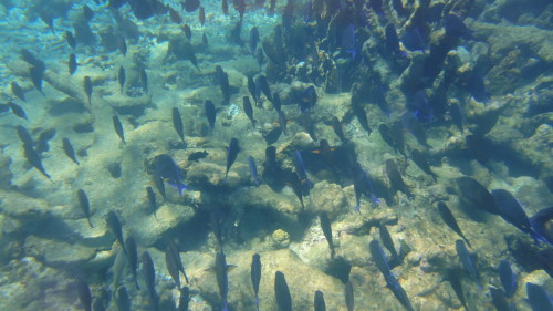 Snorkel em Boca de Cote - Los Roques