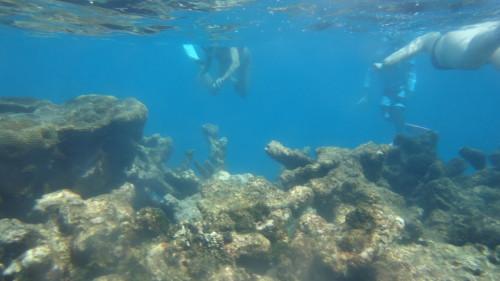 Snorkel - Carenero - Los Roques