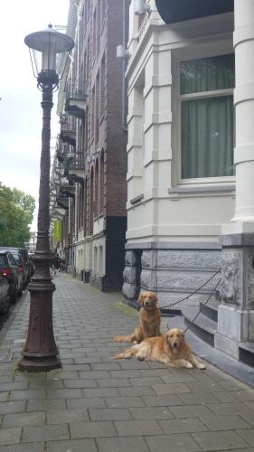 Cachorros Amsterdam